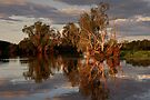 Evening in Kakadu by Karine Radcliffe