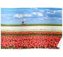 Flowering Holland Poster