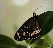 Flutter By by Eamonn Doyle