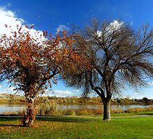 Loosing Their Finery, Marsing Idaho by trueblvr