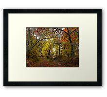 Talk About Fall Colors ~ Takena Trail ~ Framed Print