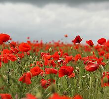 Poppy Field by caughtinmotion