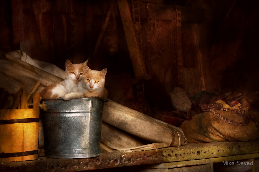 Animal - Cat - Bucket of fun  by Mike  Savad