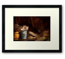 Animal - Cat - Bucket of fun  Framed Print