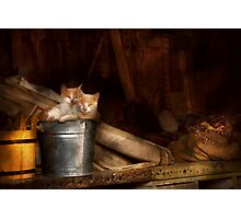 Animal - Cat - Bucket of fun  Photographic Print