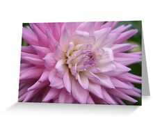 A beautiful flower in the summer sun Greeting Card