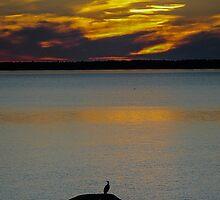 Cormoran at Saint Lawrence River  Québec by 29Breizh33