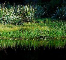 Lake Matheson 2 by Imi Koetz