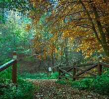 Wooden bridge in autumn colours by Tom Klausz
