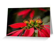 Christmas flower 01 Greeting Card