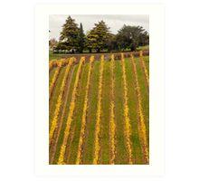 Vineyard in Autumn Art Print