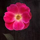 Im In A Magenta Mood by Kathilee