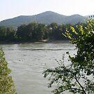 The Danube through the trees, Wachau Austria by Ilan Cohen