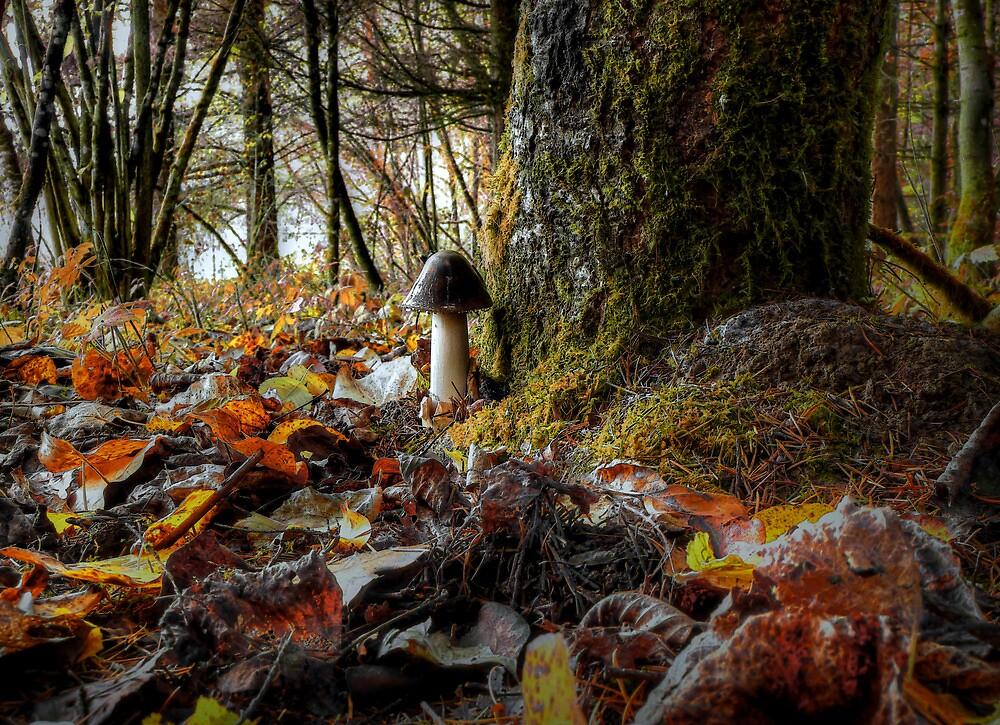 Amanita vaginata ~ Mushroom ~ by Charles & Patricia   Harkins ~ Picture Oregon