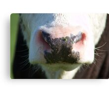 Their not all concrete cows Canvas Print