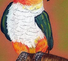 Black Headed Caique by Oldetimemercan