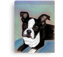 Boston Terrier Dog Canvas Print