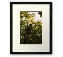 Forest in summer Framed Print