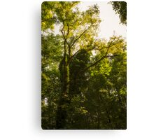 Forest in summer Canvas Print