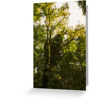 Forest in summer Greeting Card