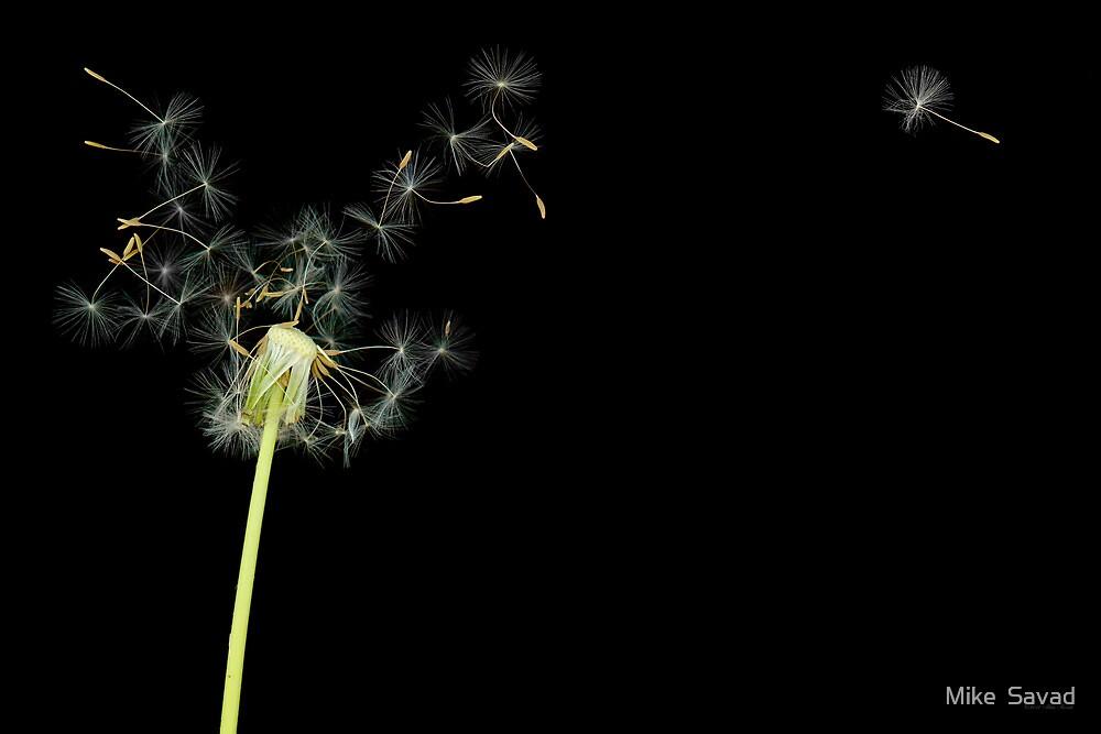 Flower - Dandelion - Gesundheit  by Mike  Savad