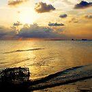 Golden Sunset by Jonicool