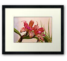 Orchid - Tickled pink  Framed Print
