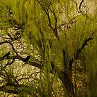 Weeping Willow by Diane Schuster