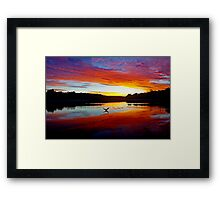 Double Crested Cormorant at Sunset Framed Print