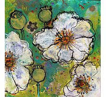 White Poppies Photographic Print