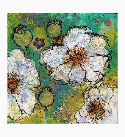 White Poppies Photographic Print