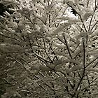 Snow on tree at night by TravelGrl