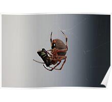 Spider Food Poster
