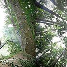 Hammock Camping by Dan Jesperson