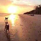 Belgian Malinois at Sunrise by Belgian Shepherd Dog Club of QLD Inc