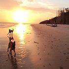 Belgian Malinois at Sunrise by Belgian Shepherd Dog Club of QLD Inc