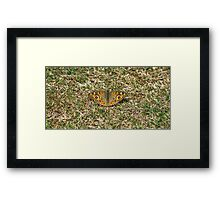 Catchin' Some Rays Framed Print