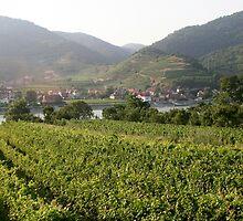 Vineyard and small village near the Danube, Wachau Austria by Ilan Cohen