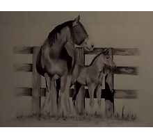 'MARE AND FOAL' Photographic Print