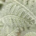 Leaves of Lothlorien by Aileen David