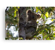 Backyard Blinky Bill Canvas Print