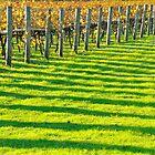 vineyard bars by metriognome