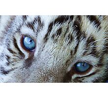 Baby Blue Tiger Eyes Photographic Print