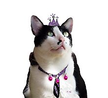 King Tux >^^< Photographic Print