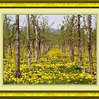 Dandelions in the vine fields by marchello