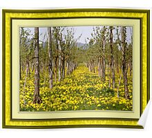 Dandelions in the vine fields Poster