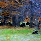 Cattle Nestled Down From the First Winds of November by TrendleEllwood