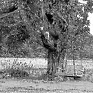 A  swing on a tree by marchello