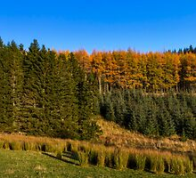 Glenkindie Trees in Autumn by JASPERIMAGE