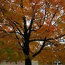 Fall 2013 2 by dge357